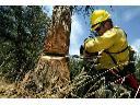 Wycinanie drzew, wycinka drzew, Wisła, Ustroń, Brenna, Górki, Skoczów