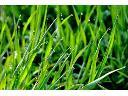 Konserwacja i Pielegnacja Ogrodów Sprzątanie Ogrodów Koszenie traw , warszawa, mazowieckie
