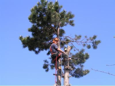 wycinka drzew z użyciem lin w trudno dostępnych miejscach - kliknij, aby powiększyć