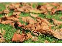 Wywóz liści, gałęzi - z załadunkiem , Wołomin, mazowieckie
