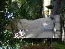 Zdjęcie 2 Głowa konia arabskiego ( na sprzedaż)