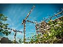 Kurs operatora żurawi wieżowych z egzaminem państwowym przed UDT, Wieluń, łódzkie