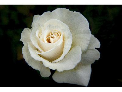 kwiat - kliknij, aby powiększyć
