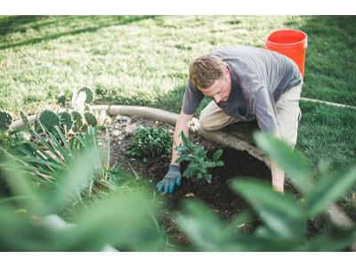 Ogrodnik  - kliknij, aby powiększyć