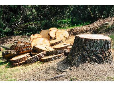 wycinka drzew - kliknij, aby powiększyć
