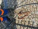 Zdjęcie nr 9 wycięty korzeń z kanalizacji fi 150
