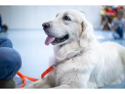 Dogoterapia kynoterapia terapia w towarzystwie psa spotkania z psem